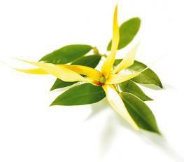 Spray beauté et douceur des cheveux à l'ylang ylang : recette de cosmétique naturel maison avec macosmetoperso
